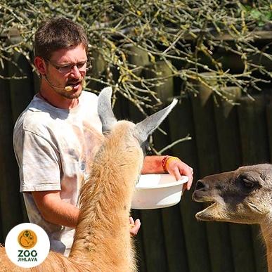 Do zoo s průvodcem ve všední den - malá skupina