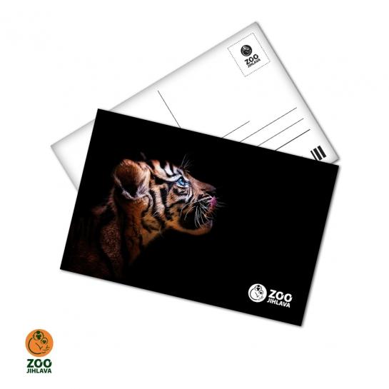 Pohled 15x10 cm - tygr sumaterský